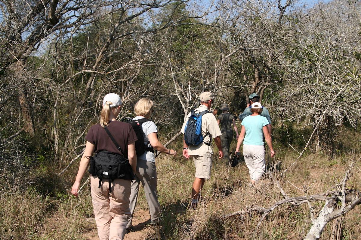 Walking Safari Carrot Cake